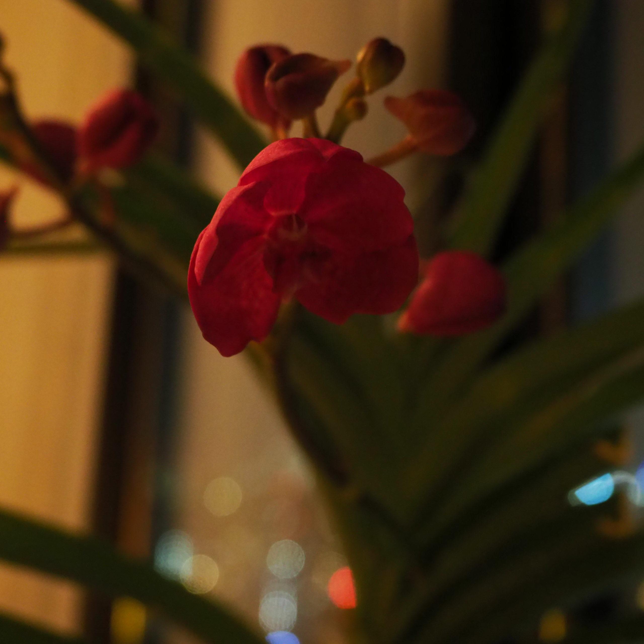 バンダの花がちょっと開花